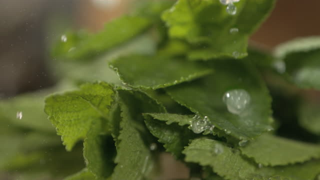 high speed water drops on mint leaves - mint leaf culinary stock videos and b-roll footage