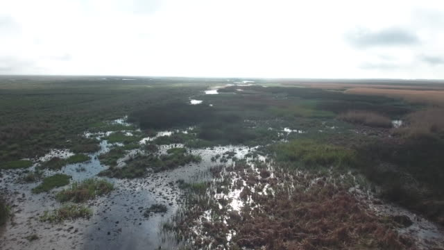 high to low over swamp with birds flying - drone aerial 4k everglades, swamp bayou with wildlife alligator nesting ibis, anhinga, cormorant, snowy egret, spoonbill, blue heron, eagle, hawk, cypress tree 4k nature/wildlife/weather drone aerial video - bayou lafourche stock-videos und b-roll-filmmaterial