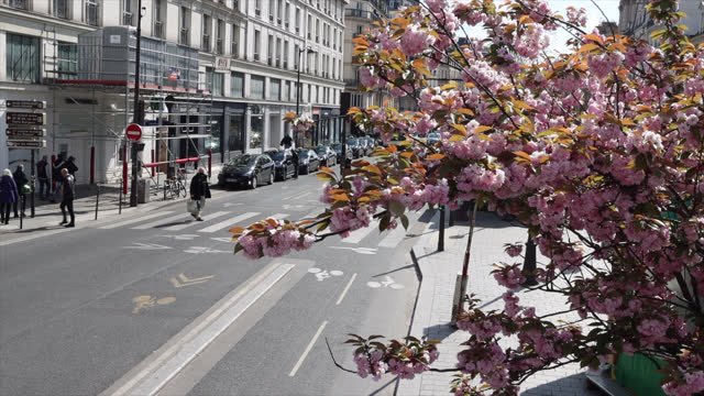 high view on the street with flowering trees in spring - pedestrian stock videos & royalty-free footage
