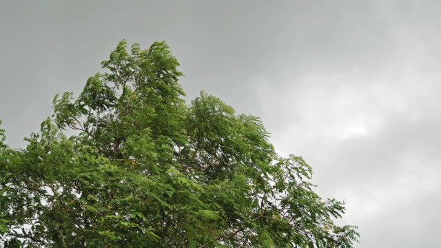 high wind blowing trees in a cloudy day. - gale stock videos & royalty-free footage