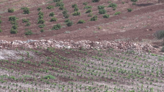 high-angle view of a beqaa valley vineyard. - viniculture stock videos & royalty-free footage