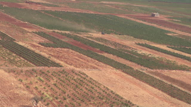 high-angle view of a car driving through a beqaa valley vineyard. - viniculture stock videos & royalty-free footage
