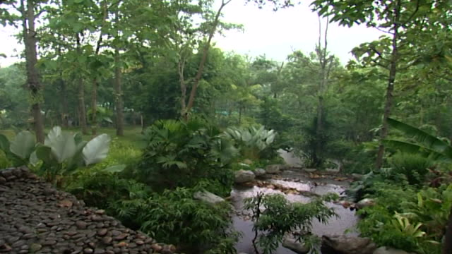 highangle view of a densely forested landscape under a downpour of rain - tropical tree stock videos & royalty-free footage