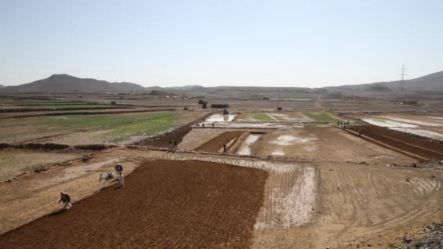 highangle view of farmers ploughing a field with a donkey - yemen stock videos & royalty-free footage
