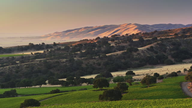 highland vineyards in monterey county, california - drone shot - hill stock videos & royalty-free footage
