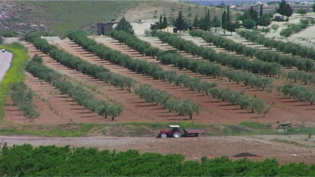vídeos y material grabado en eventos de stock de hight-angle view of olive groves in the afrin countryside. - huerta