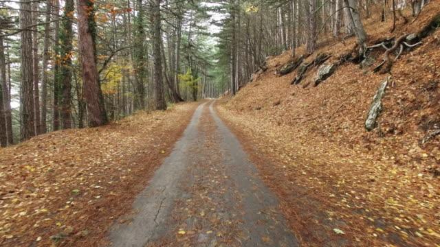 highway through a forest in autumn
