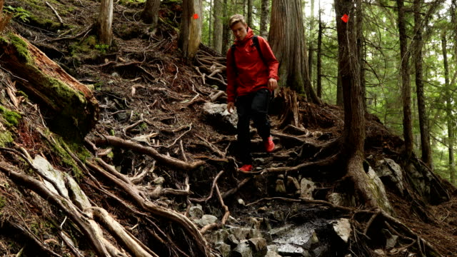 hiker ascends a steep web of roots - pacific northwest usa stock videos & royalty-free footage
