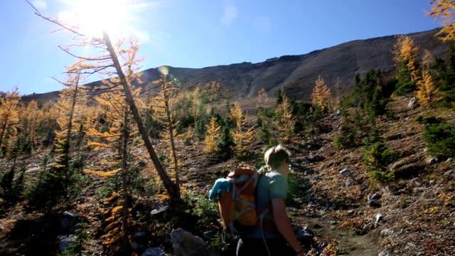 vídeos y material grabado en eventos de stock de excursionistas ascends trail a través de los alpes larches - pinaceae