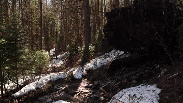 hiker crossing small stream and walking deep into forest - wilderness stock videos & royalty-free footage