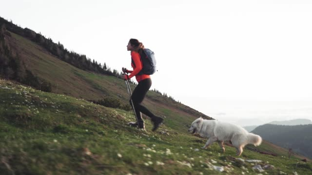 hiker in action accompanied by her dog - hiking pole stock videos and b-roll footage