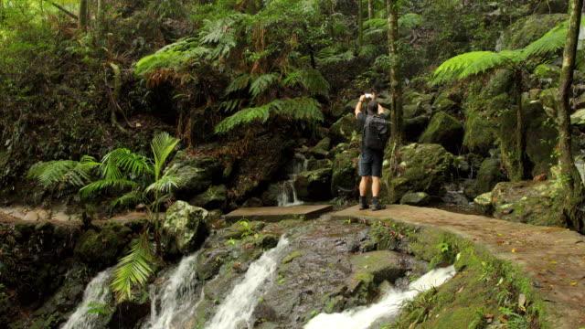 wanderer im australischen regenwald hält an, um fotos zu machen - tropischer regenwald stock-videos und b-roll-filmmaterial