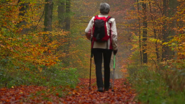 Hiker in autumnal beech forest