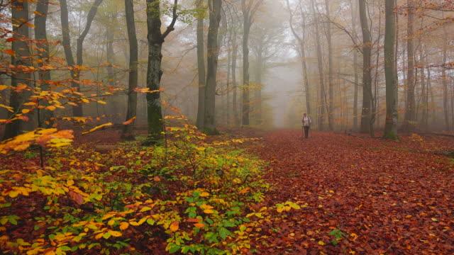 vídeos de stock e filmes b-roll de hiker in autumnal beech forest - de corpo inteiro