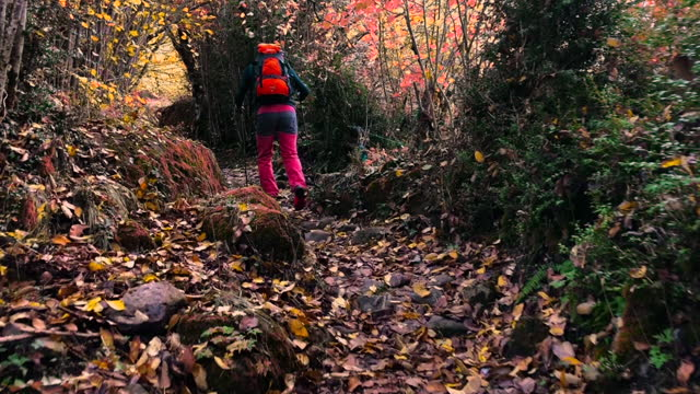 hiker in nature footpath with autumn colors in the ordesa national park in the spanish pyrenees mountains. colores de otoño en el parque nacional de ordesa. spain. - parque nacional stock videos & royalty-free footage