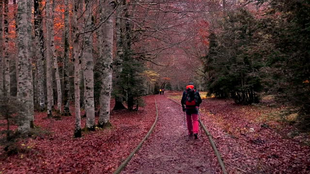 hiker in nature footpath with autumn colors in the ordesa national park in the spanish pyrenees mountains. colores de otoño en el parque nacional de ordesa y monte perdido. spain. - parque nacional stock videos & royalty-free footage