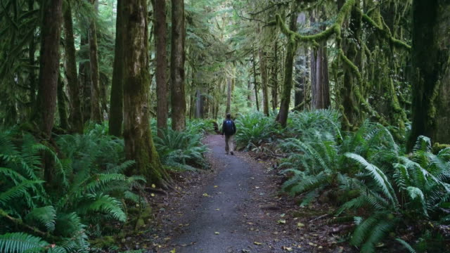 hiker in olympic national park washington usa - pacific northwest usa stock videos & royalty-free footage