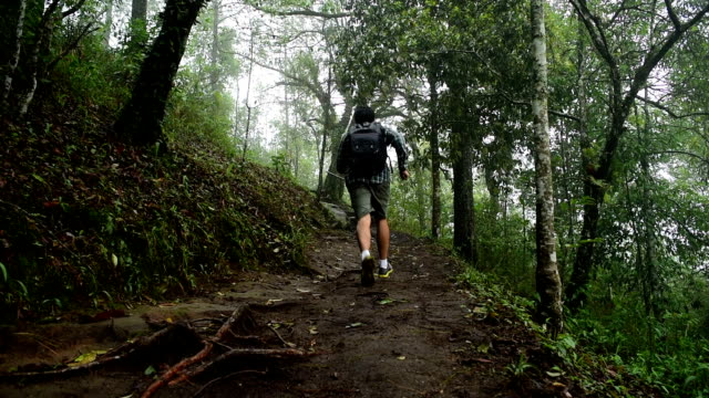 hiker man running in rain forest jungle - tropical rainforest stock videos & royalty-free footage