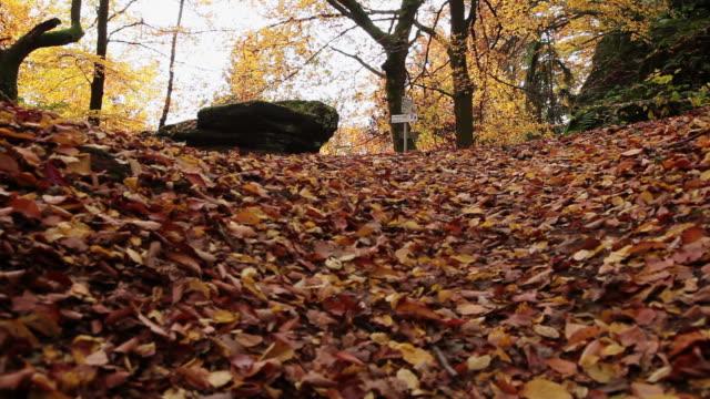 cu hiker walking in autumn forest  / kastel-staadt, rhineland-palatinate, germany - gemeinsam gehen stock-videos und b-roll-filmmaterial