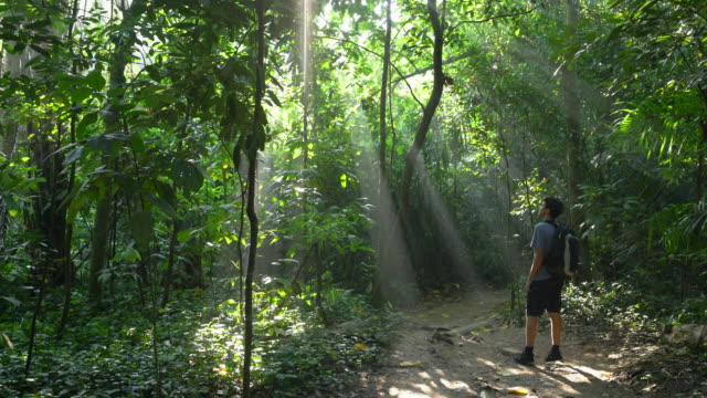 ws hiker walking in the rainforest - one teenage boy only stock videos & royalty-free footage