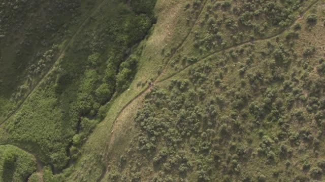 Hiker Walking on Trail