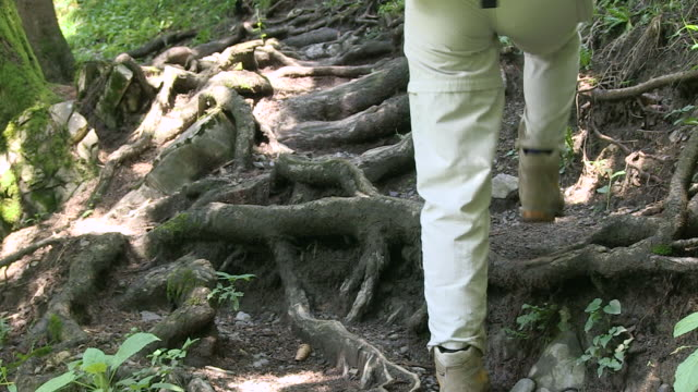 MS Hiker walking on woodland / Oberstdorf, Bavaria, Germany