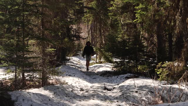 hiker walking over snow toward camera in thick woodlands of washington - wilderness stock videos & royalty-free footage