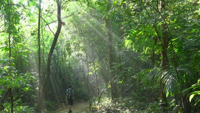 ws hiker walking through a rainforest - teenage boys stock videos & royalty-free footage