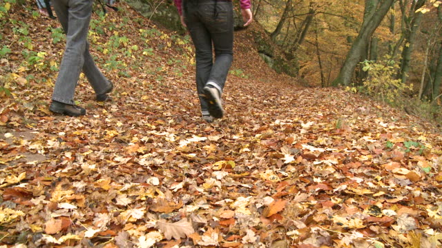 ms hiker walking through autumn forest  / kastel-staadt, rhineland-palatinate, germany - gemeinsam gehen stock-videos und b-roll-filmmaterial