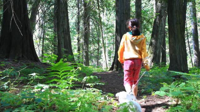 vídeos de stock e filmes b-roll de sapatos de caminhada através da floresta com cão pequeno - trela de animal de estimação