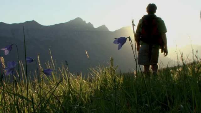 ws, la, hiker walking towards sun across mountain meadow, canmore, alberta, canada - alm stock-videos und b-roll-filmmaterial