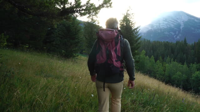 hiker walks through meadow, looks out across mountains and forest - one mature man only stock-videos und b-roll-filmmaterial