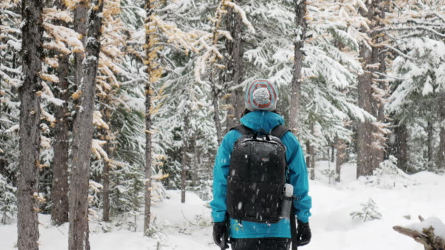 Hiker woman trekking on Fresh Winter Snow in pine forest