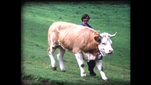 1980 hikers accompanied by cows running down hill - schweiz stock-videos und b-roll-filmmaterial