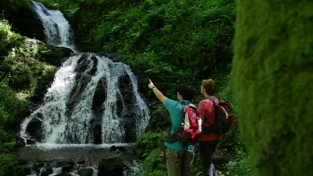Hikers observing river in forest