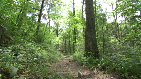 hikers trek a trail through an appalachian forest. - appalachia stock videos & royalty-free footage