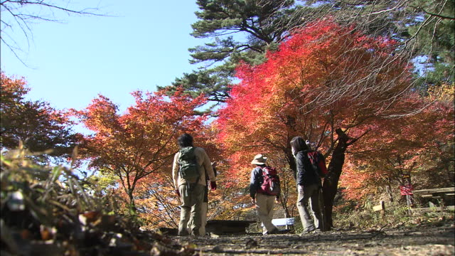 Hikers walk along a tree lined path on Mt. Mitake, Tokyo.