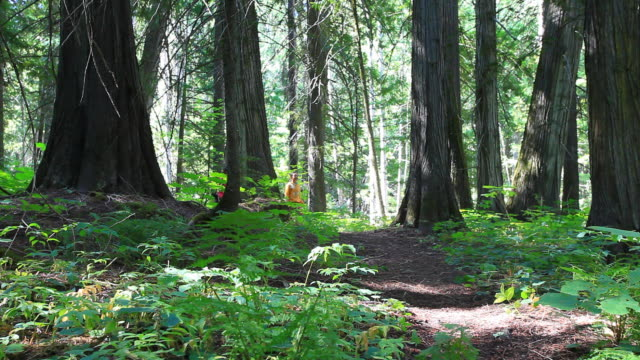 hikers walking through forest with small dog - havanese stock videos & royalty-free footage