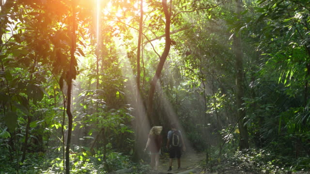 vidéos et rushes de ws hikers walking through the rainforest with beams of sunlight - bois