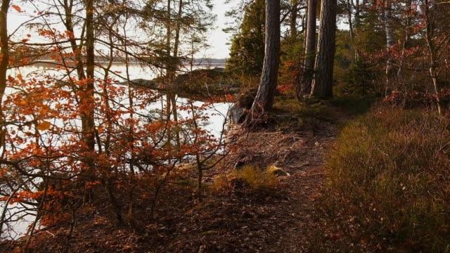 vidéos et rushes de hiking along a still lake an early spring morning - pin