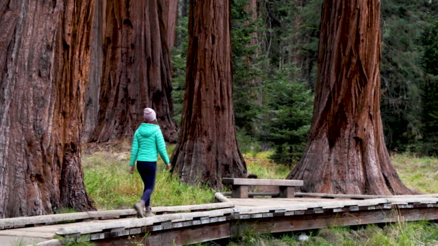 vidéos et rushes de hiking among the largest and oldest trees in the world - adulte d'âge moyen