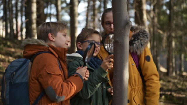 hiking children observing insects on tree - imgorthand stock videos & royalty-free footage
