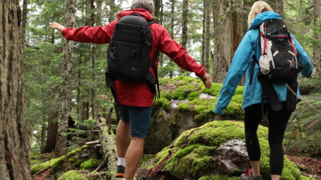 hiking couple explore old growth cedar and fir temperate rainforest - grey jacket stock videos and b-roll footage