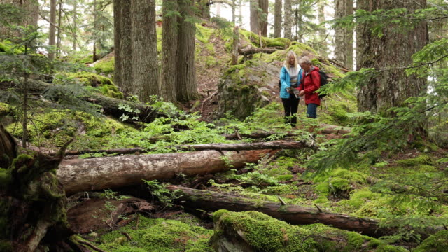 hiking couple explore old growth cedar and fir temperate rainforest - temperate rainforest stock videos & royalty-free footage