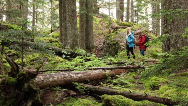 hiking couple explore old growth cedar and fir temperate rainforest - pedal pushers stock videos & royalty-free footage
