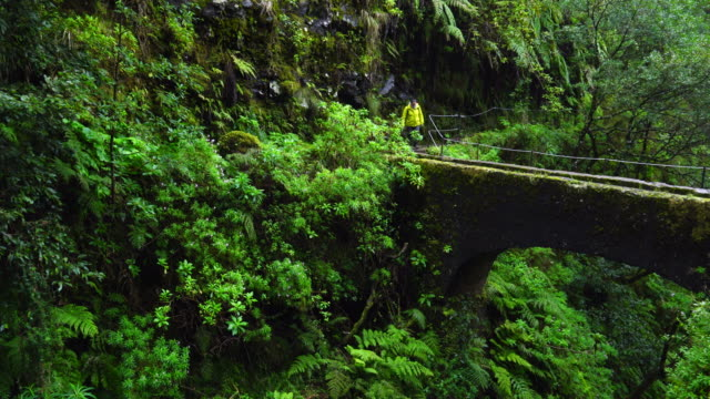 hiking in a laurel forest in madeira island - madeira stock videos and b-roll footage
