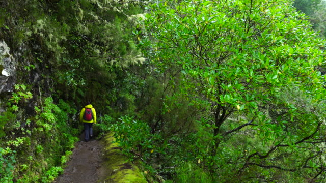 hiking in a laurel forest of madeira island - alloro video stock e b–roll