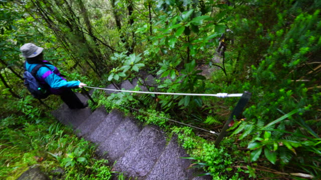 hiking in a laurel forest of madeira island - madeira stock videos and b-roll footage