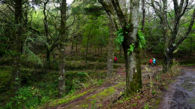 hiking in a laurel forest of madeira - madeira stock videos and b-roll footage