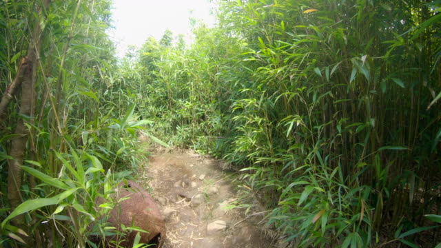 hiking in bamboo forest, mother and son, off road to hana, maui, hawaii. - maui stock videos & royalty-free footage